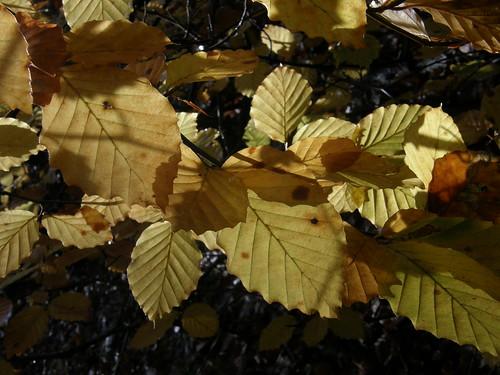 Back-lit leaves I