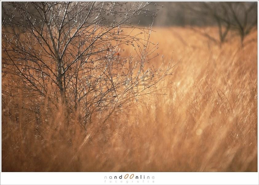 Herfst in de Groote Peel