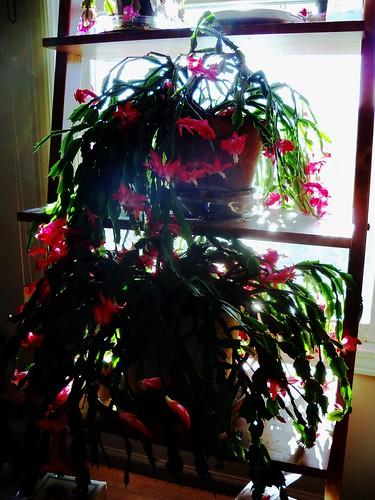 tropical cactus 4