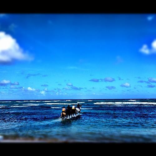 Morning ocean horse ride, anyone? #nofilter