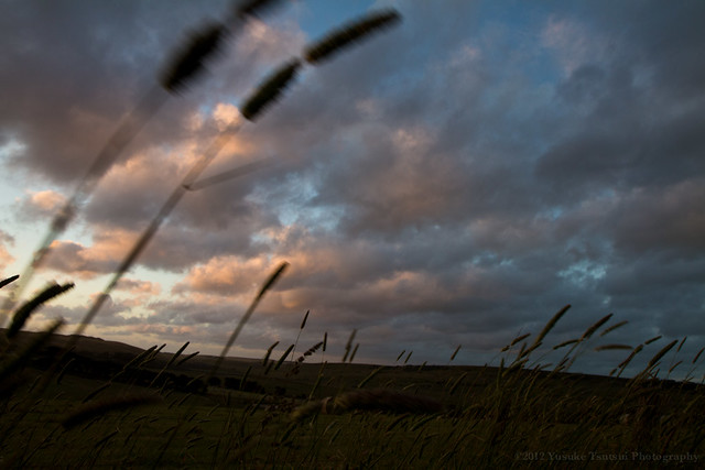 Sunset, Saturday, on the way back from the 12 Apostles to Apollo Bay