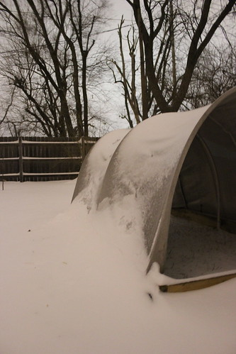 20121221. Snow banks and chicken wagons.