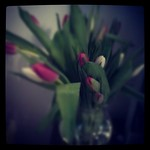 These pretty tulips just showed up at my door. Yes, my husband is awesometastic <3