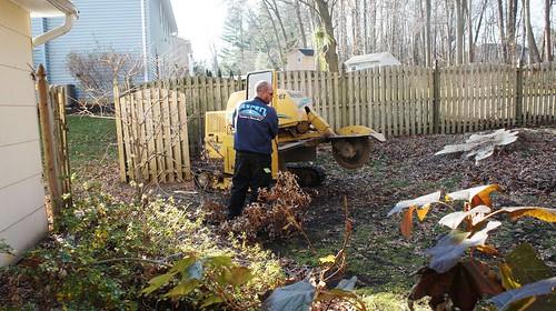 Grinding the Fallen Tree's Stump