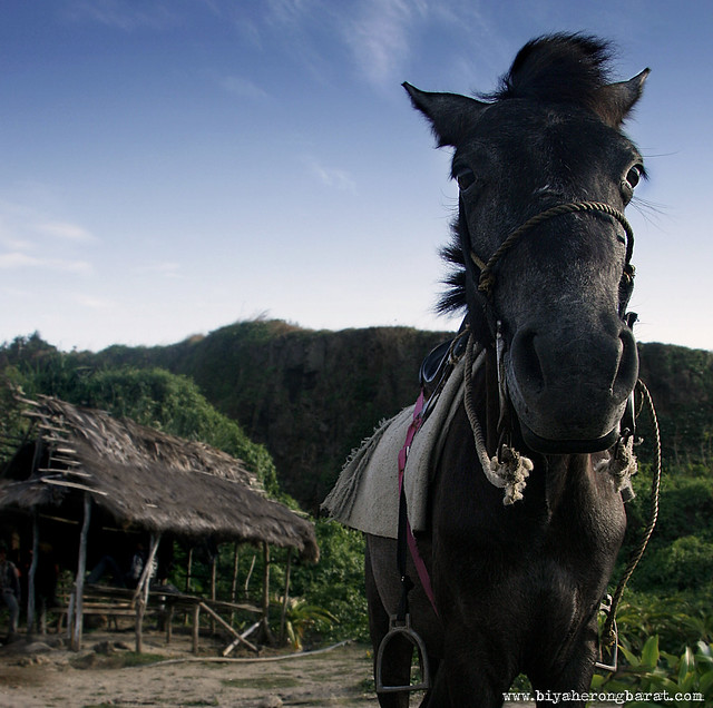 Horse for rent in Kapurpurawan Rock Formations Burgos Ilocos Norte