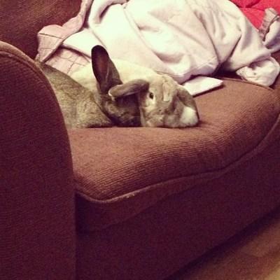 Sneaky bunnies!