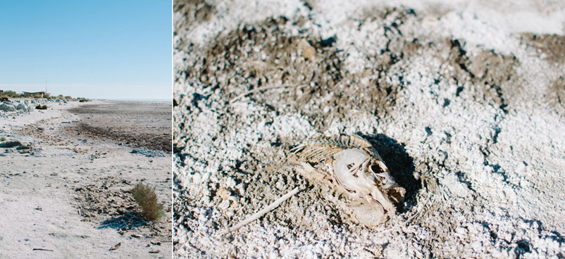dead fish at the salton sea