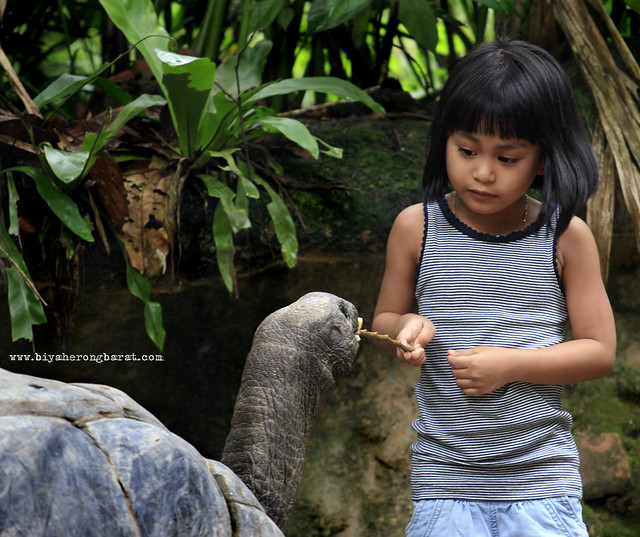 Feeding Session in Singapore Zoo