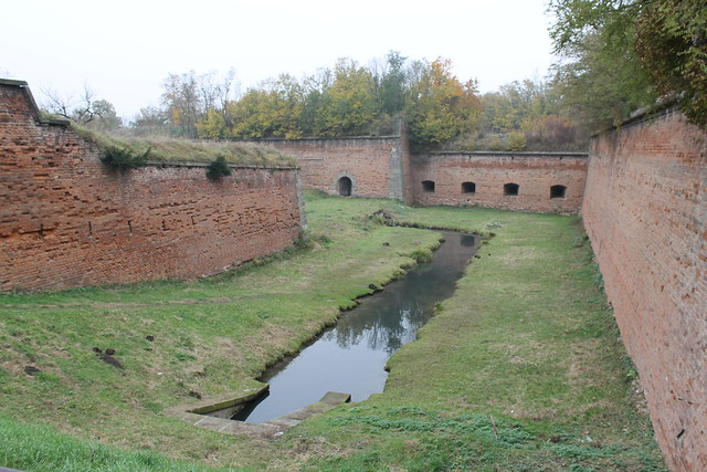 Coypu colony in the Terezín fortifications