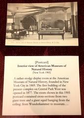 AMNH Postcard
