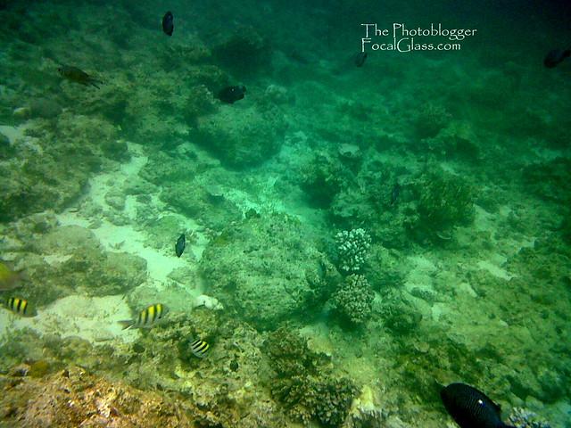 underwater life in mactan