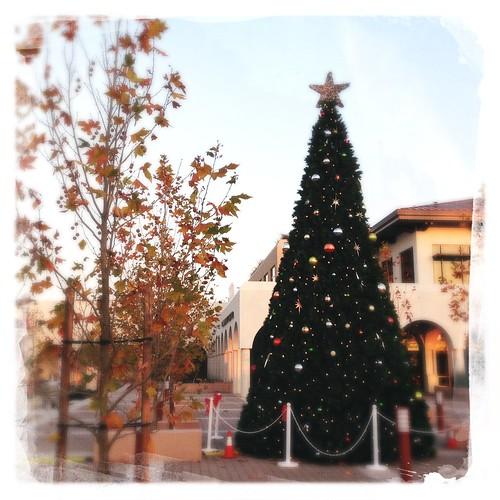 The holiday tree at city hall