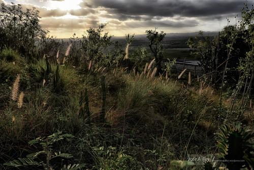 Dreamed Garden by Rey Cuba