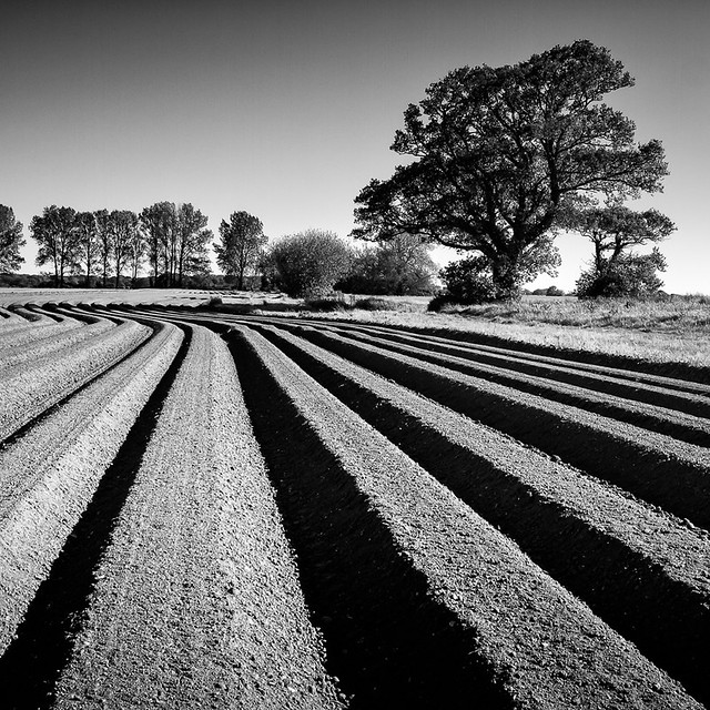 20120526-Ploughed field3.jpg