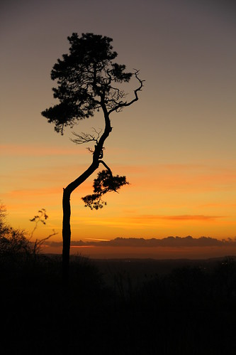 My favourite tree at sunset by TempusVolat