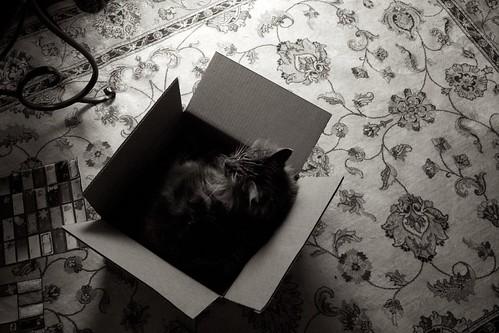 Cat in a Box 2