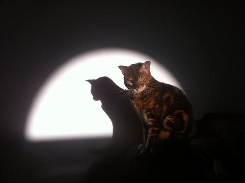 Cat in the spotlight by Fitzrovia