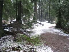 winter in Burnaby Lake Regional Park..