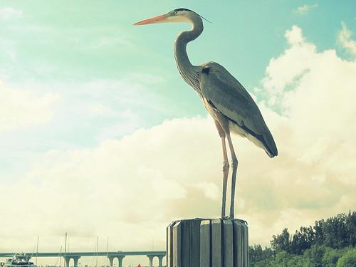 Bird visitors