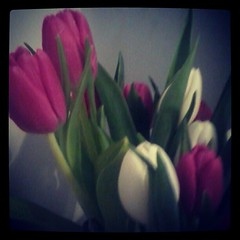 The tulips Brian sent me are even prettier today <3