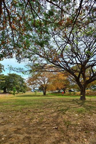 La belleza del Bosque El Samán hay que preservarla e enriquecerla. by Remmanuelli