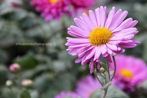 IMG_063600000000000 by ShubhenduPhotography