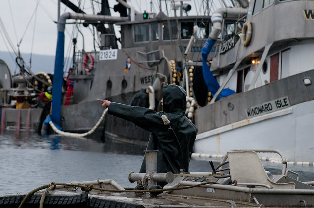 Herring Fishery Baynes Sound 2013