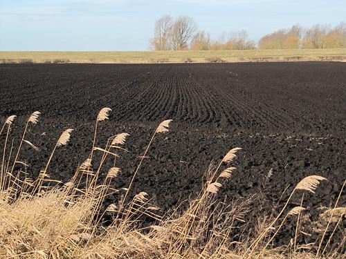 reeds, peat, river bank