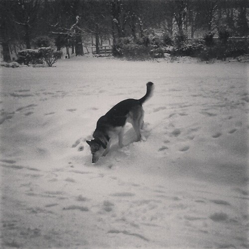 lost&found #brussels #bw #snowsunday #dog #walk