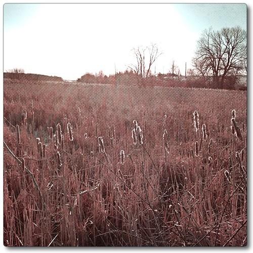 Mar 8 - favorite {I love sunny almost spring mornings} #fmsphotoaday #princeedwardcounty