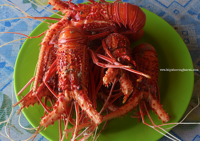Lobster in Magalawa Island Palauig Zambales