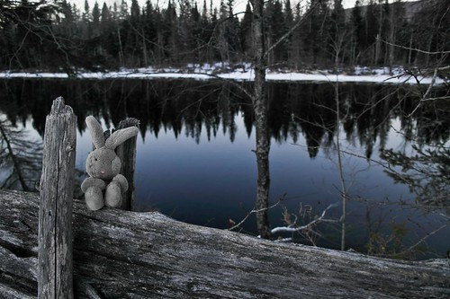Travel Bunny at The Madawaska