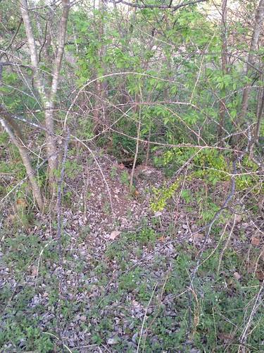 Rattlesnake hole