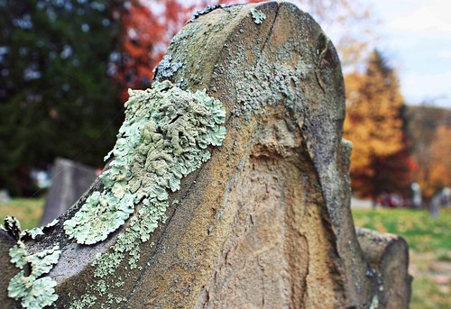 New LIfe. Tombstone with lichen in PA. Copyright Jen Baker/Liberty Images; all rights reserved