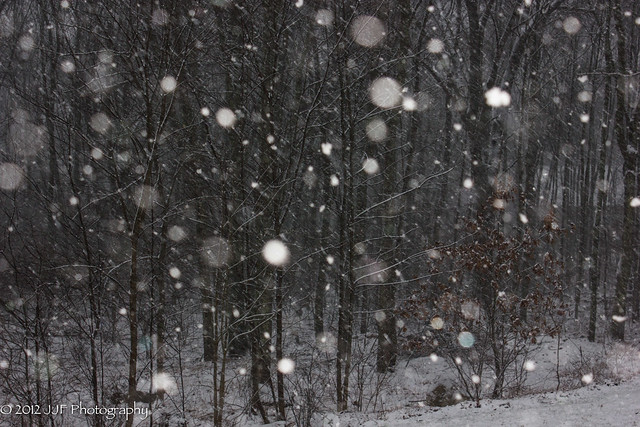 2012_Dec_29_Snow_005