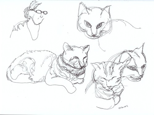 Sketches of cat