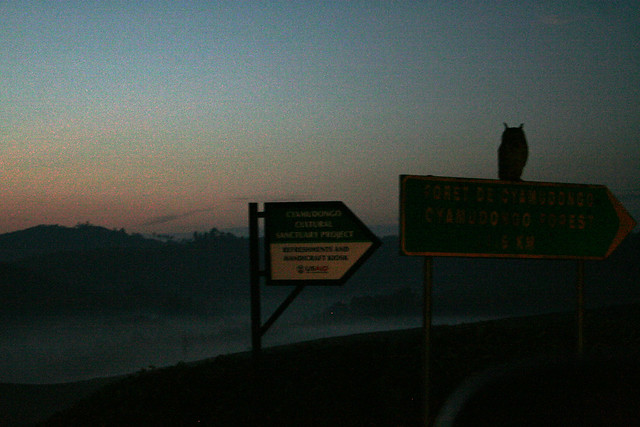 owl on a sign post