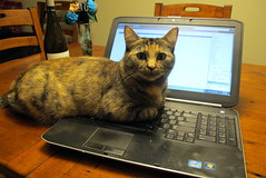 And Loves My Laptop