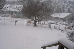 Front garden snowed in - blizzard of 8 March 2013