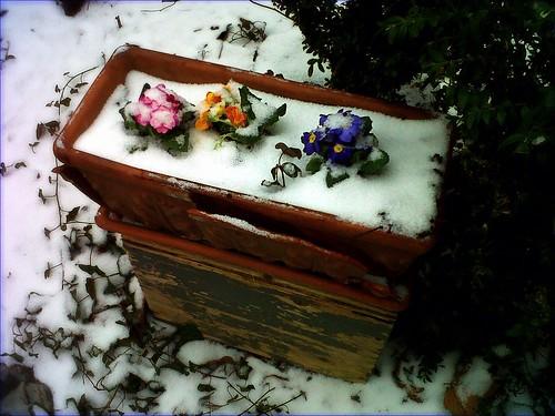 Snow in spring, 24.3.2013 by SpatzMe