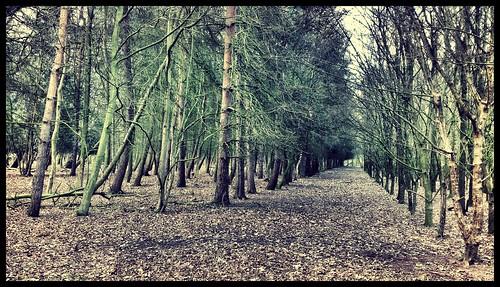 Wollaton Park by rutty
