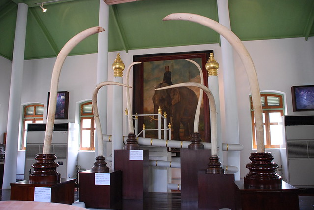 Royal elephant tusks