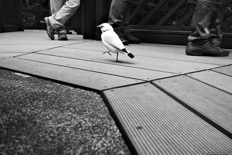 A dignified bird