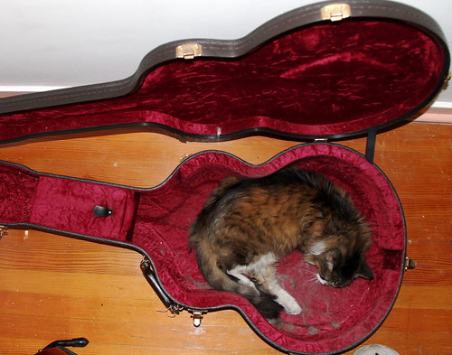 'While my guitar gently sleeps'