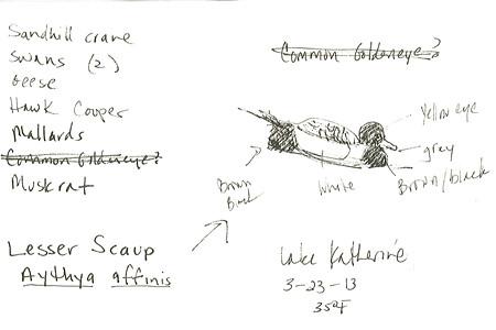 20130402_LESSER_SCAUP_sketch