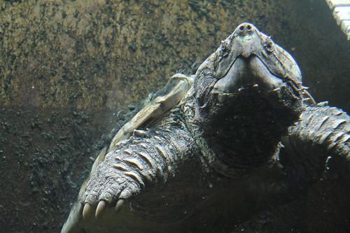 A Day at Shedd Aquarium