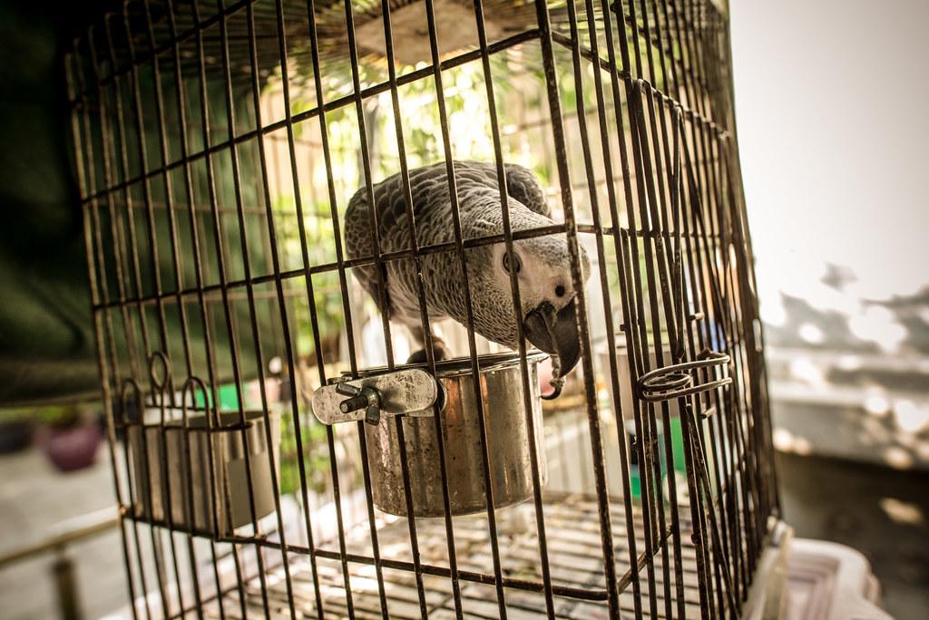 Yuen Po Street Bird Garden-1