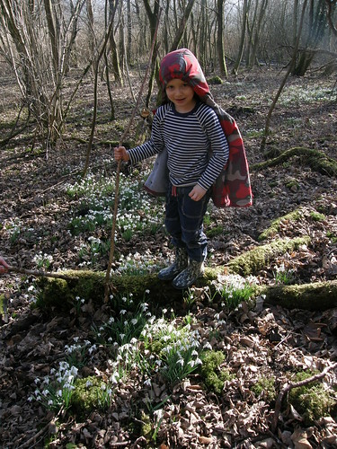 Look Dad - Snowdrops