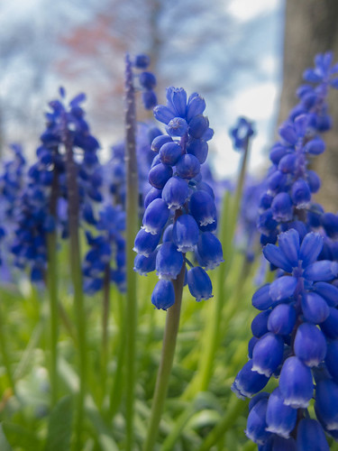 A picture of spring flowers with a out of focus background