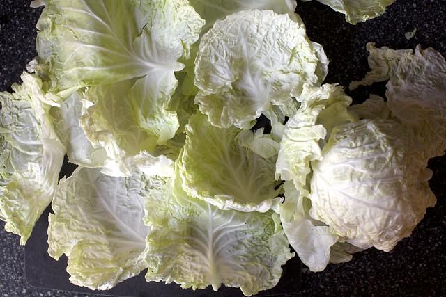big floppy cabbage leaves